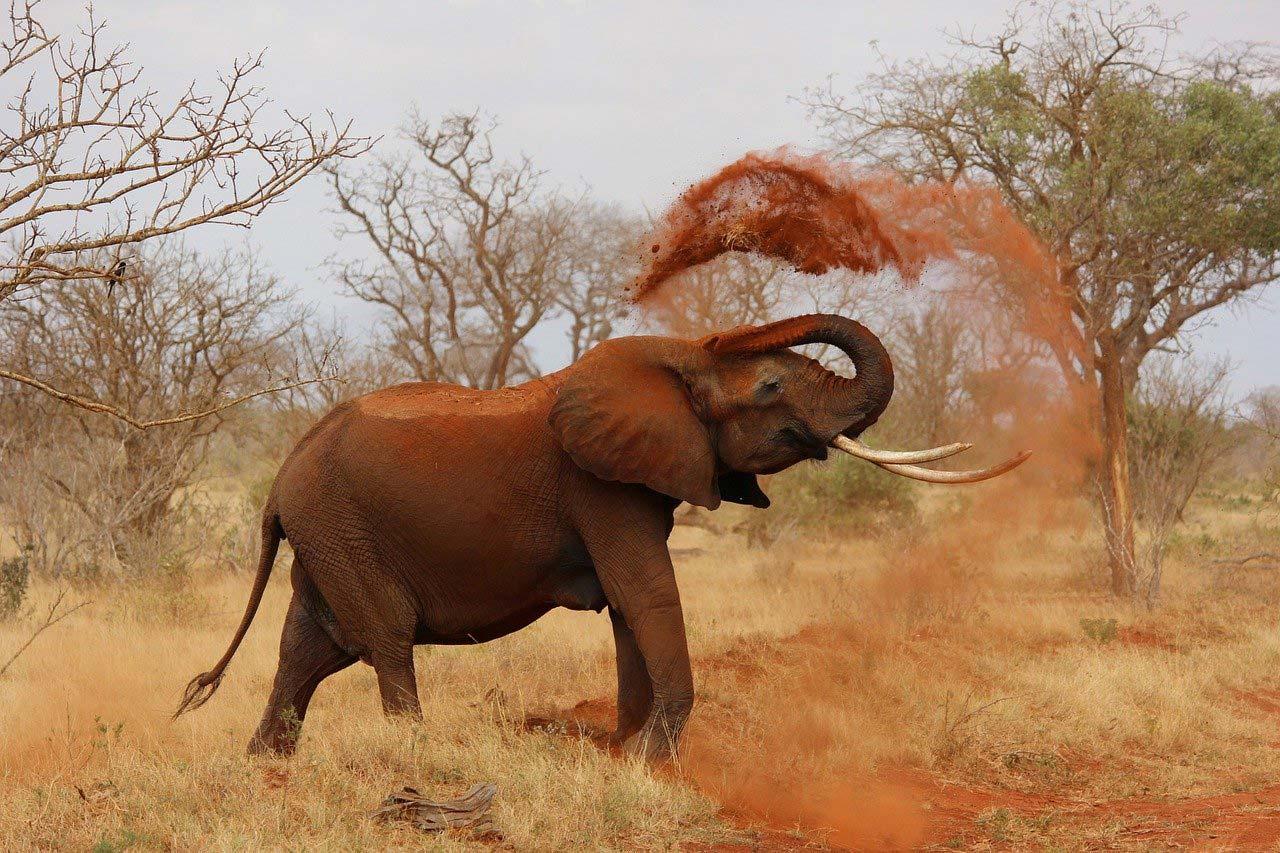 wildlife in kenya africa