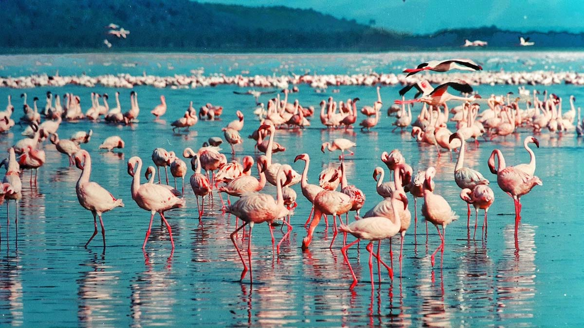 river with wildlife in kenya